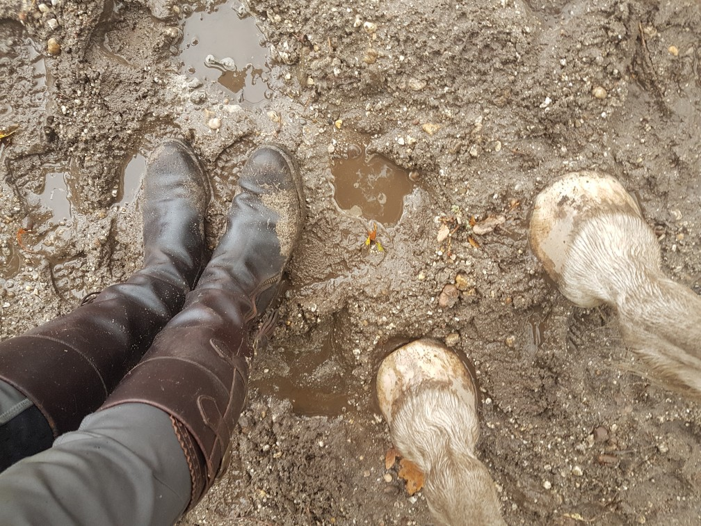 paard modder