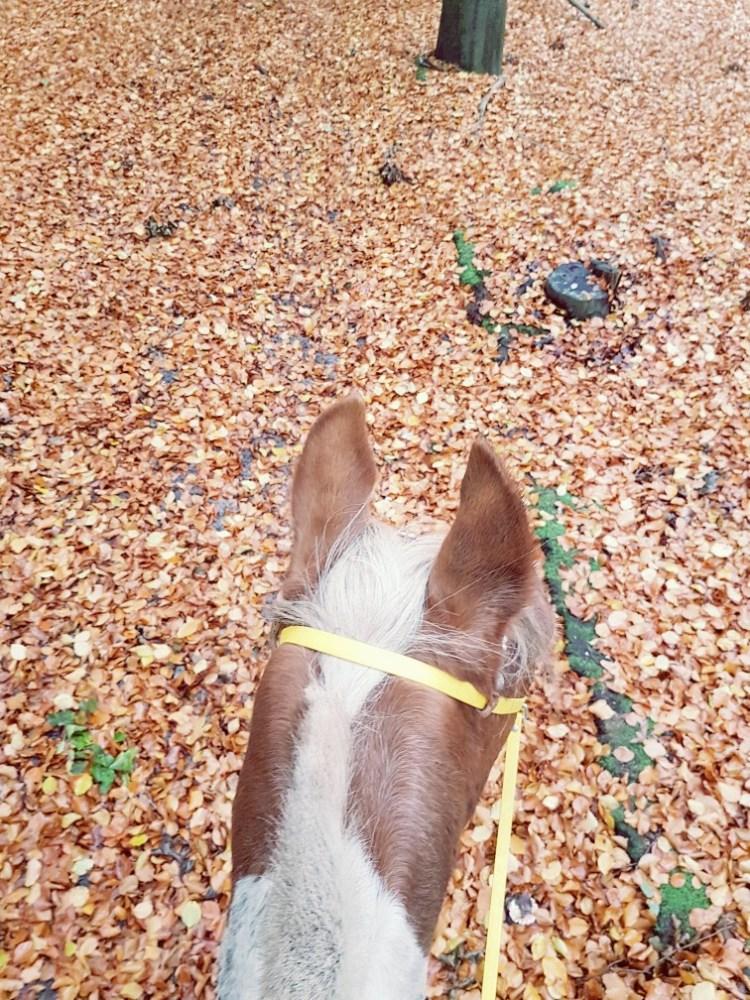 paard herfst bladeren