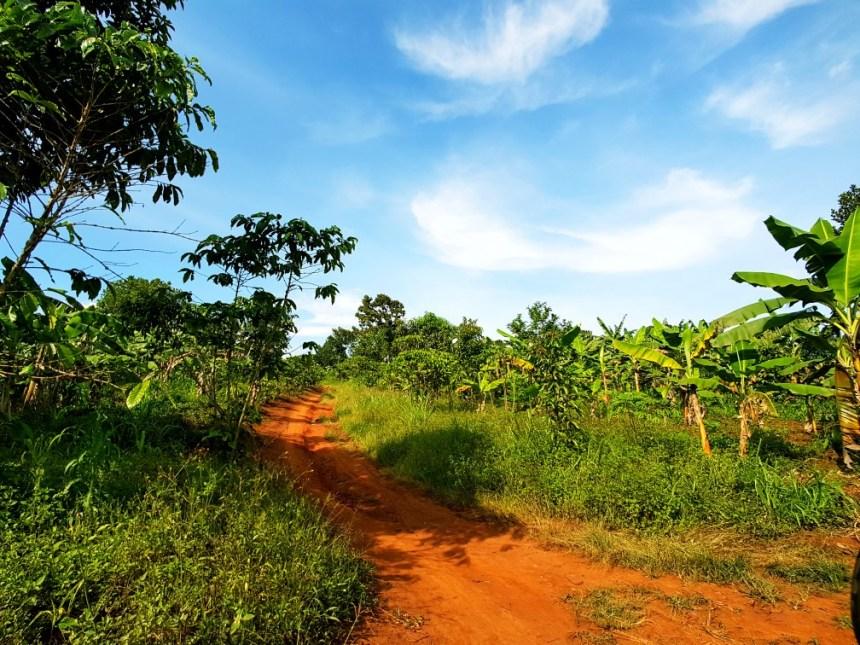 Platteland Oeganda