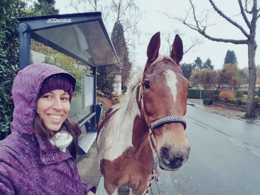 paard bushalte