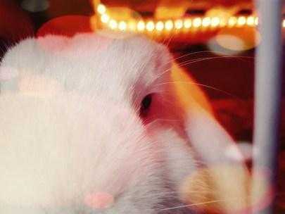 verlichting konijnenhok