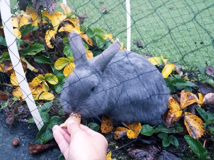 konijn aardbeien
