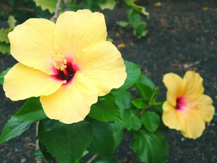 Gran Canaria bloemen en planten