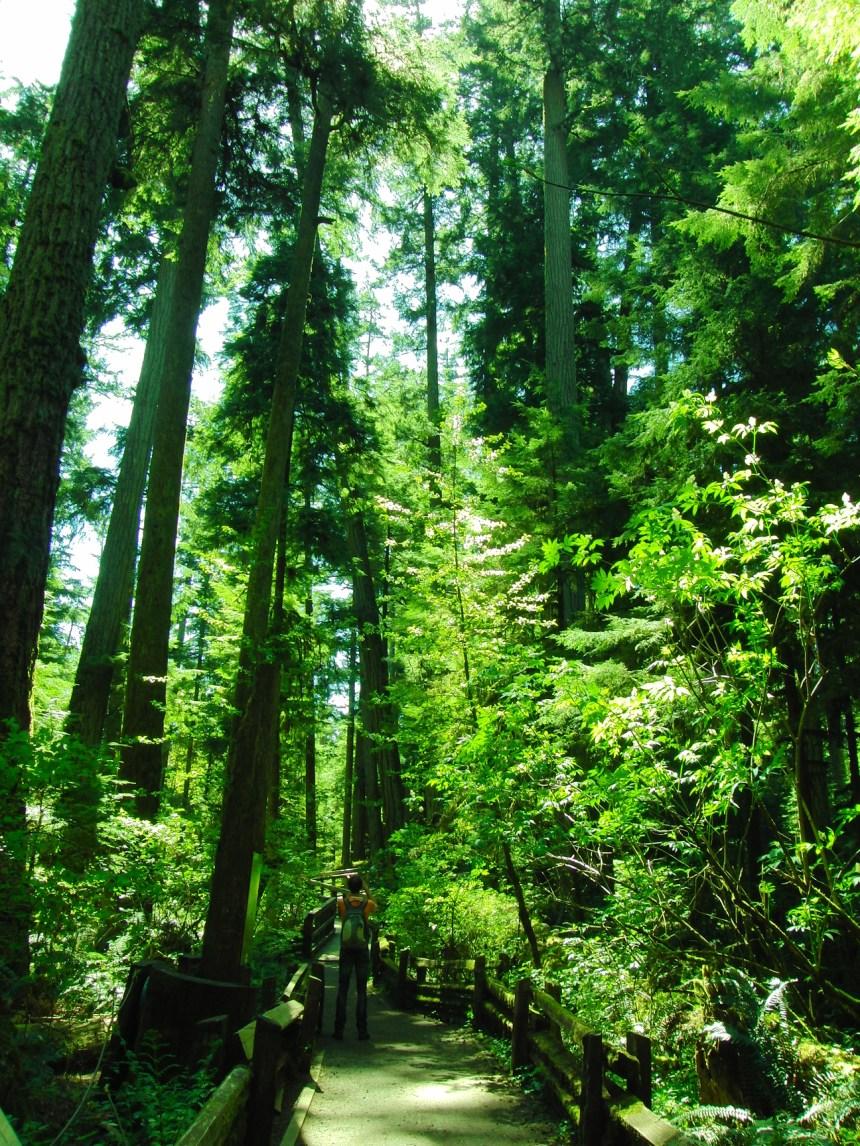 Rocky Mountains Canada grote bomen