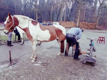 paard hoefsmid