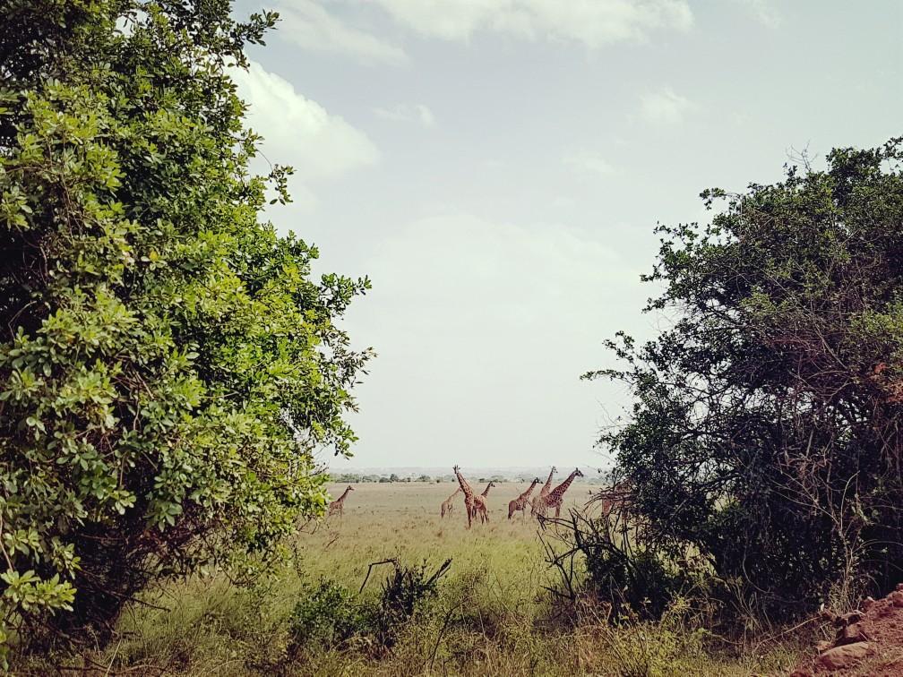 20180113_081007-1008x756Nairobi National Park Kenia