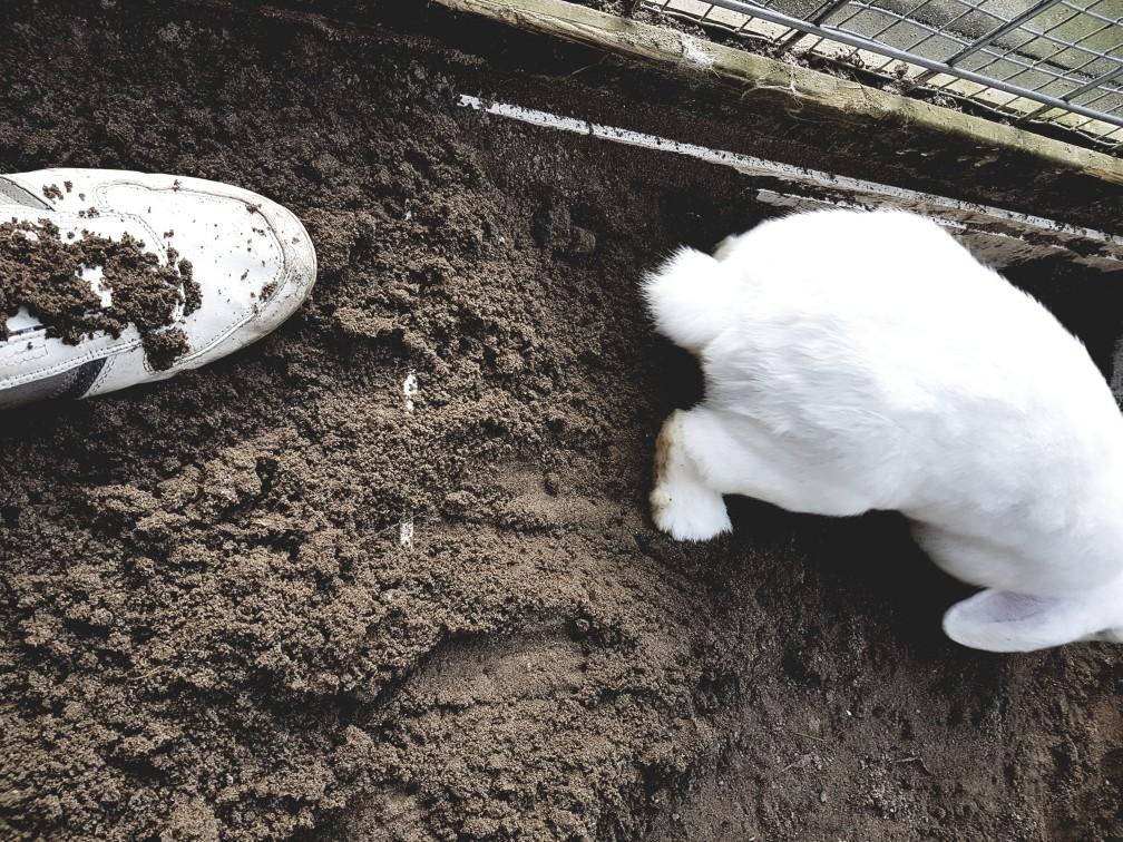 konijn graven
