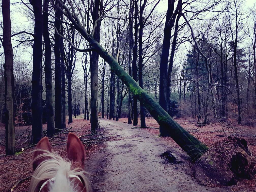 paardrijden omgevallen bomen