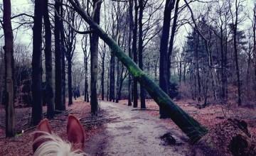paardrijden omgevallen bomen storm