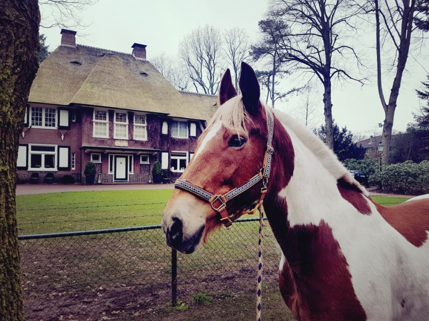 Bont paard voor landhuis