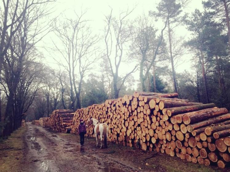 Bont paard bij houtstapel