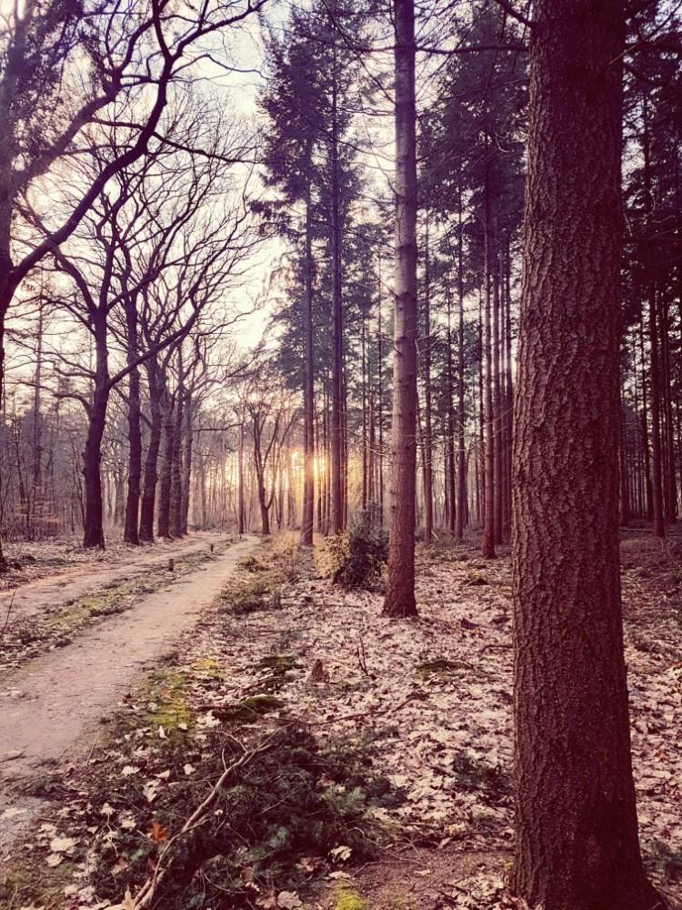 Zonsondergang bos Schaarsbergen