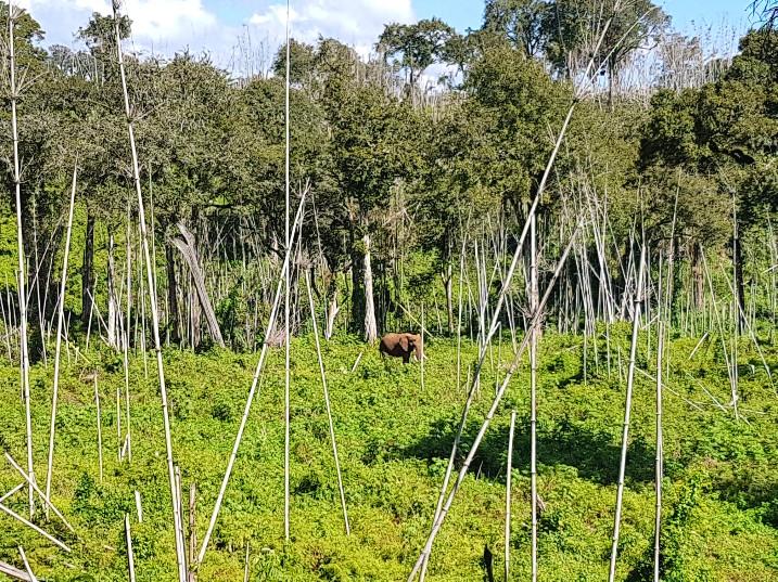 Game drive olifant Aberdare National Park The Ark Lodge Kenia