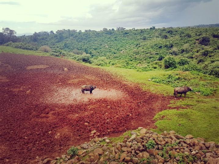 Aberdare National Park The Ark Lodge Kenia buffels drinkplaats