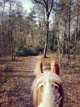 Bont paard in het bos