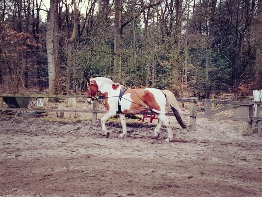 Pessoa longeren pony