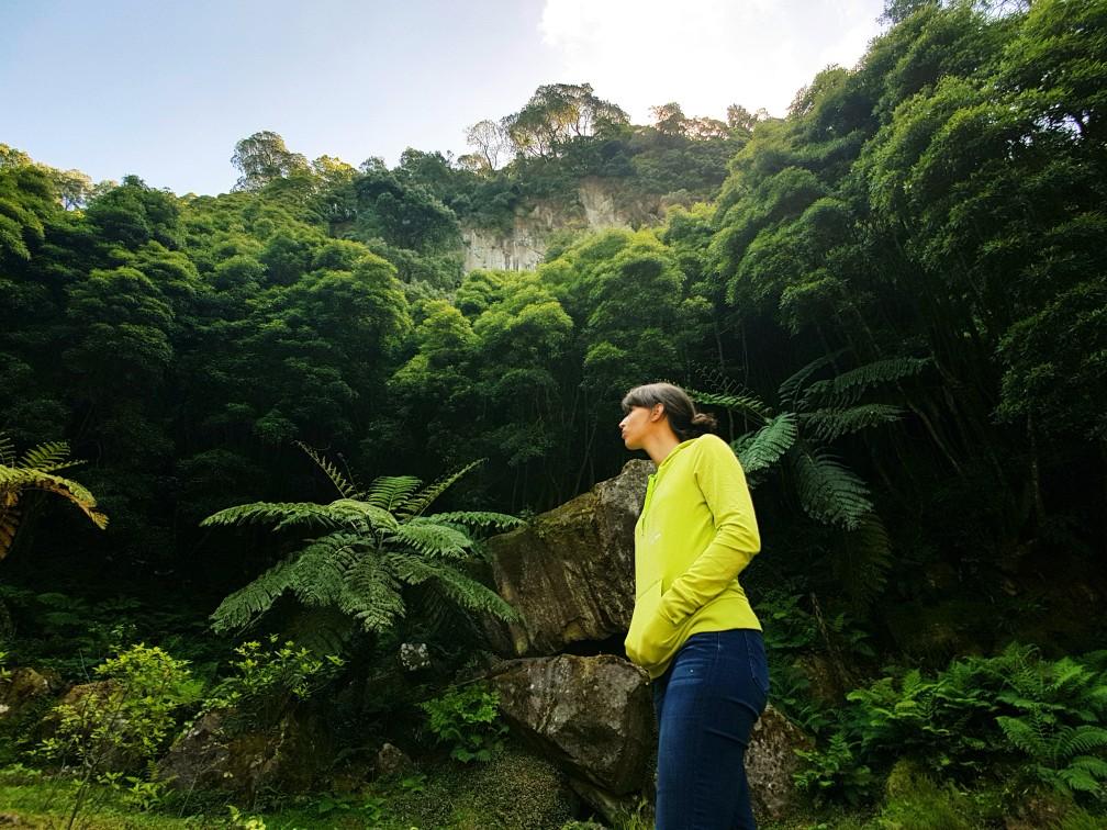 Azoren portugal regenwoud