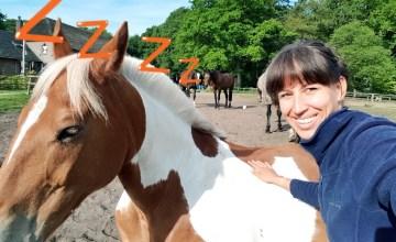 slapende bonte pony