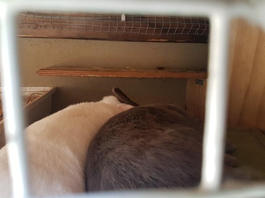 konijnen slapen lepeltje lepeltje