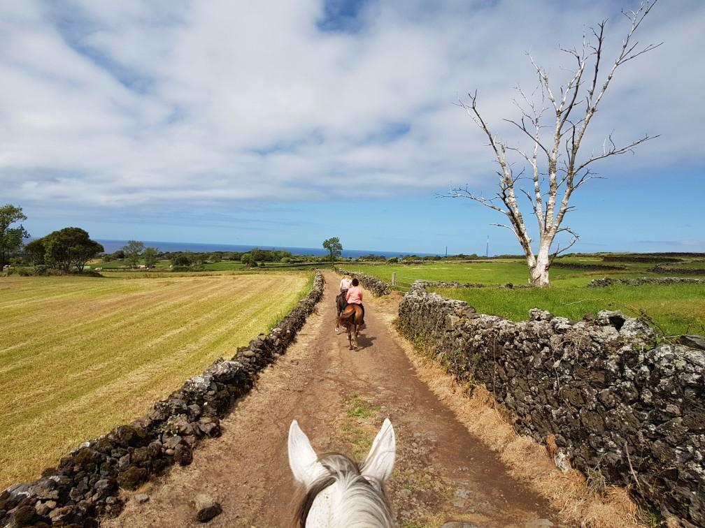Sao Miguel Azoren Portugal Paardrijden (5)