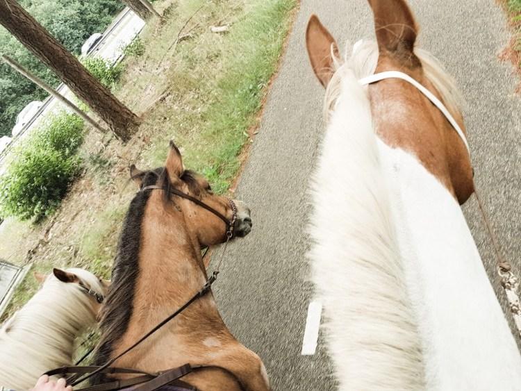 ijslander, haflinger, bont paard bosrit Arnhem