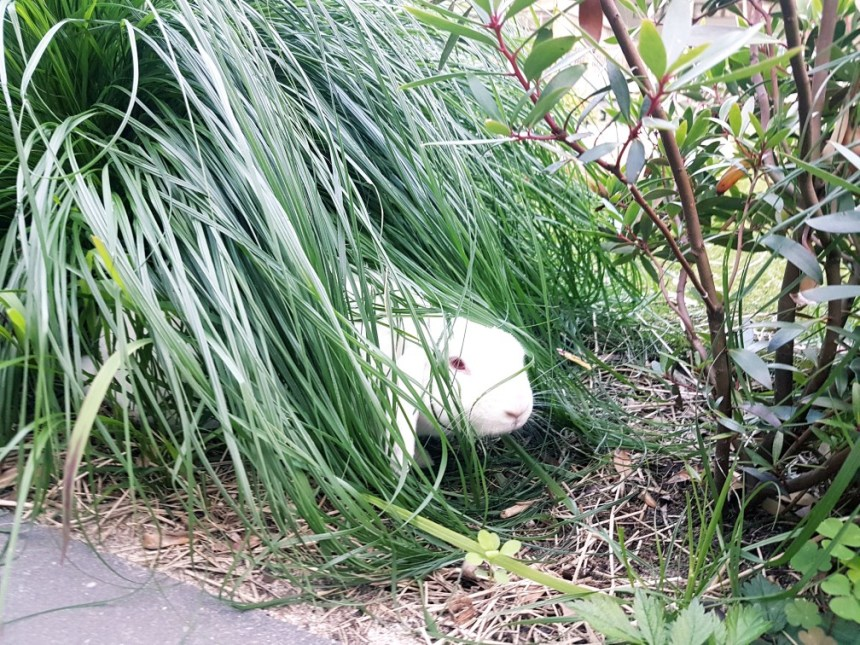 konijn in graspol