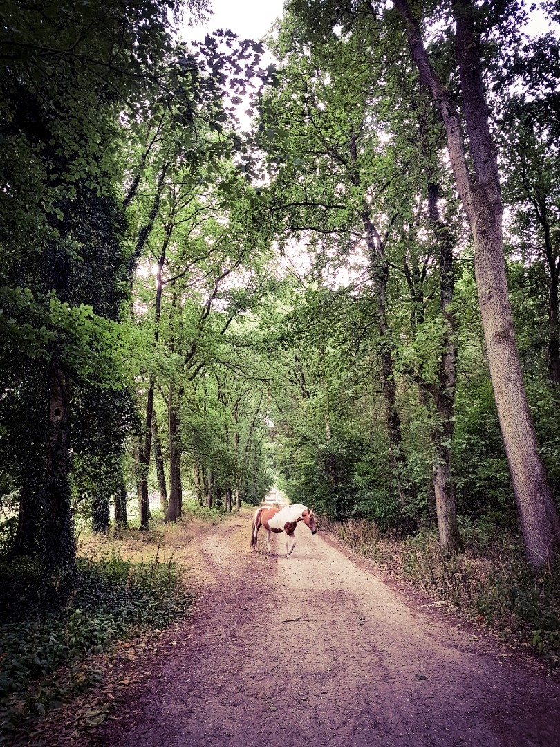 Ontsnapte pony in het bos