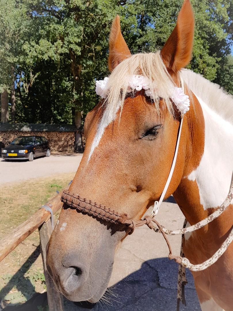 DIY bloemetjes frontriem voor paarden