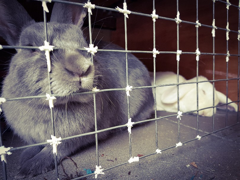 slapende konijnen