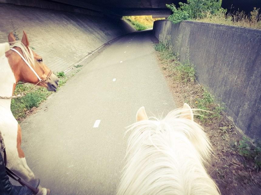 Te paard Koningshei Arnhem natuur
