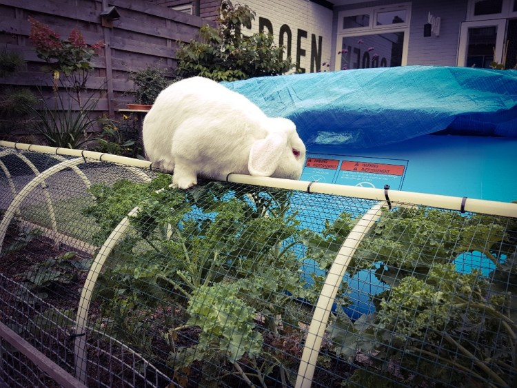 konijn eet boerenkool