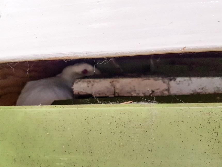 konijn verstopt in bank