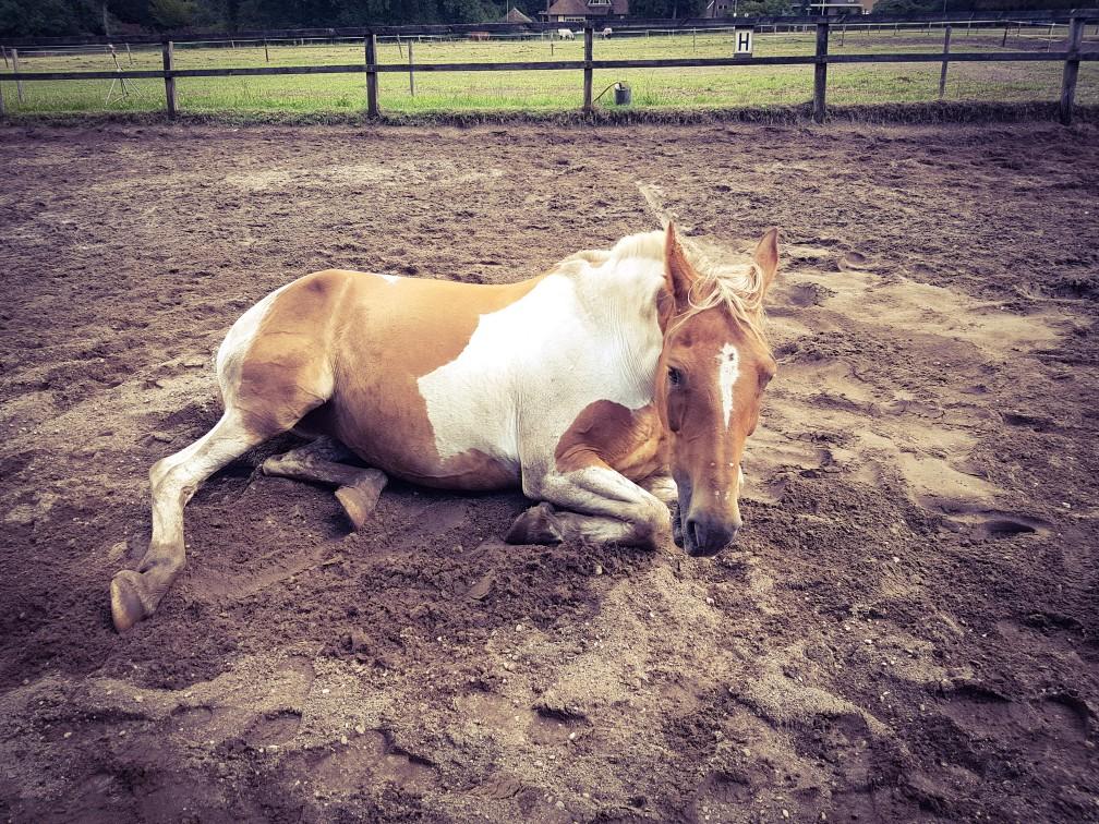 bont paard ligt in het zand
