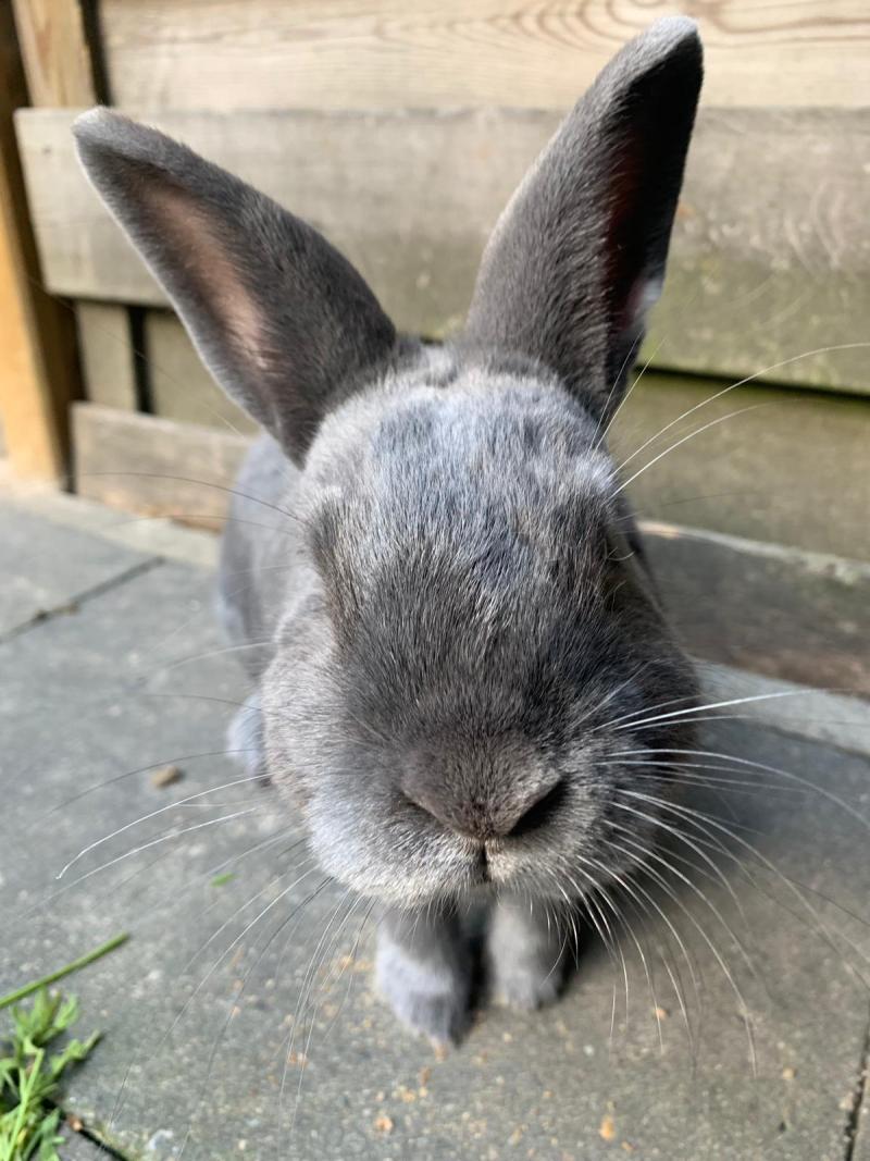 konijn close up