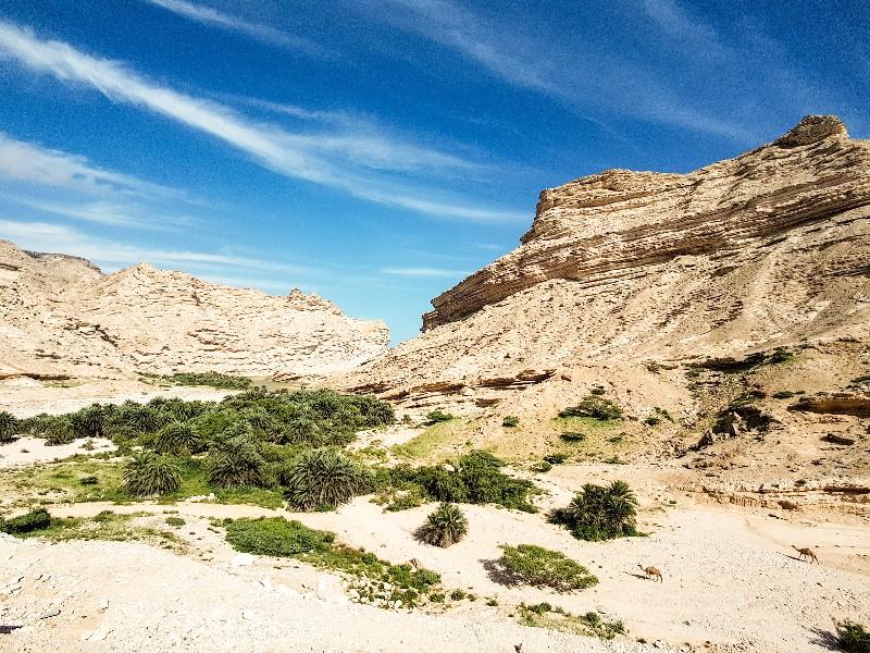 Wadi Jebel Samhan Dhofar groen Oman