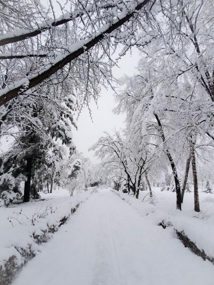 Park Timisoara Roemenië