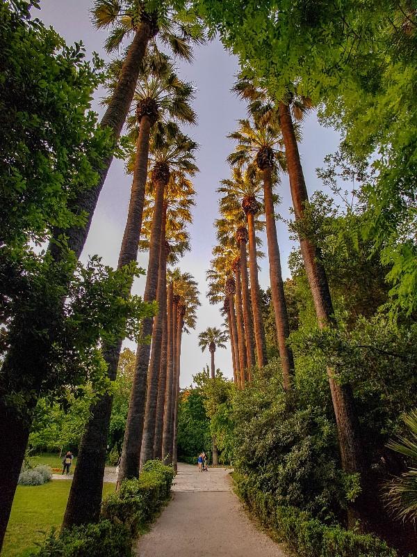Nationale tuinen palmbomen Athene Griekenland