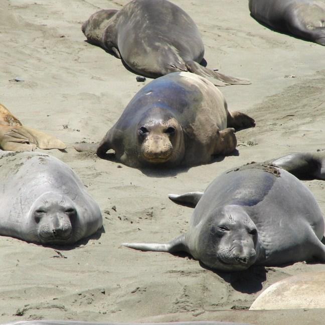 Hearst Castle USA rondreis zeeleeuwen