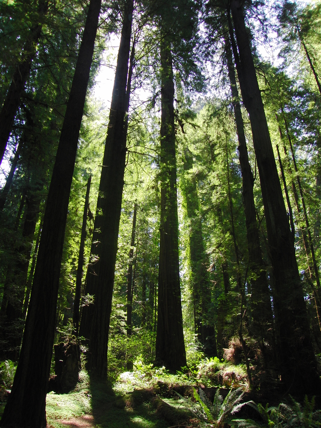 Redwood National Park Amerika