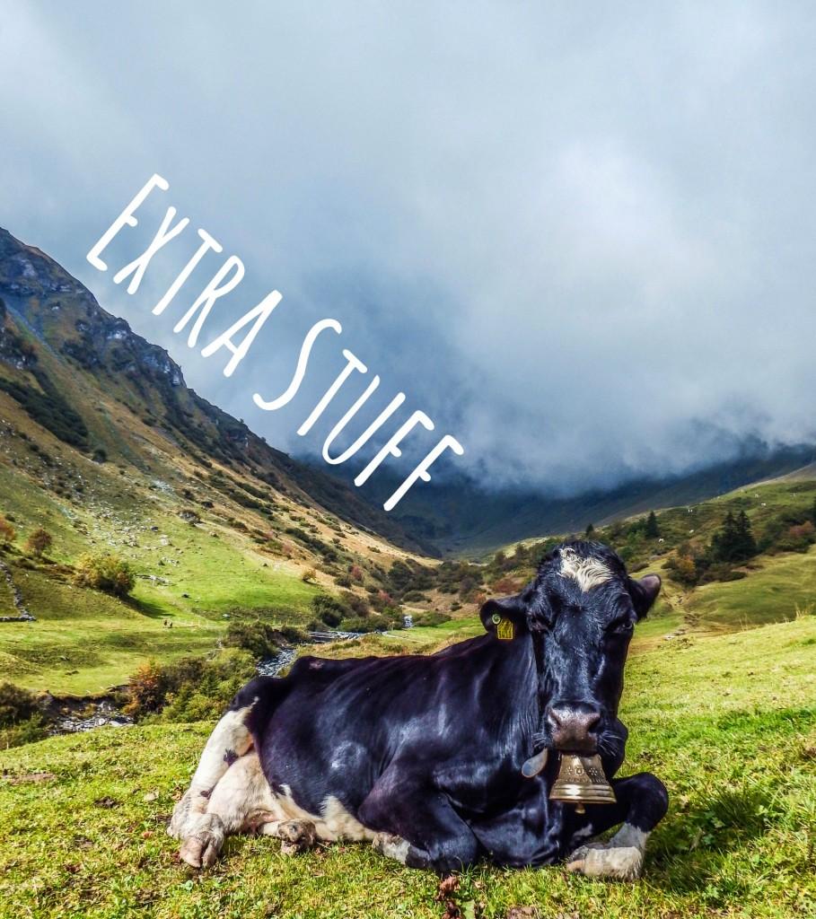 gimmelwald switzerland cow