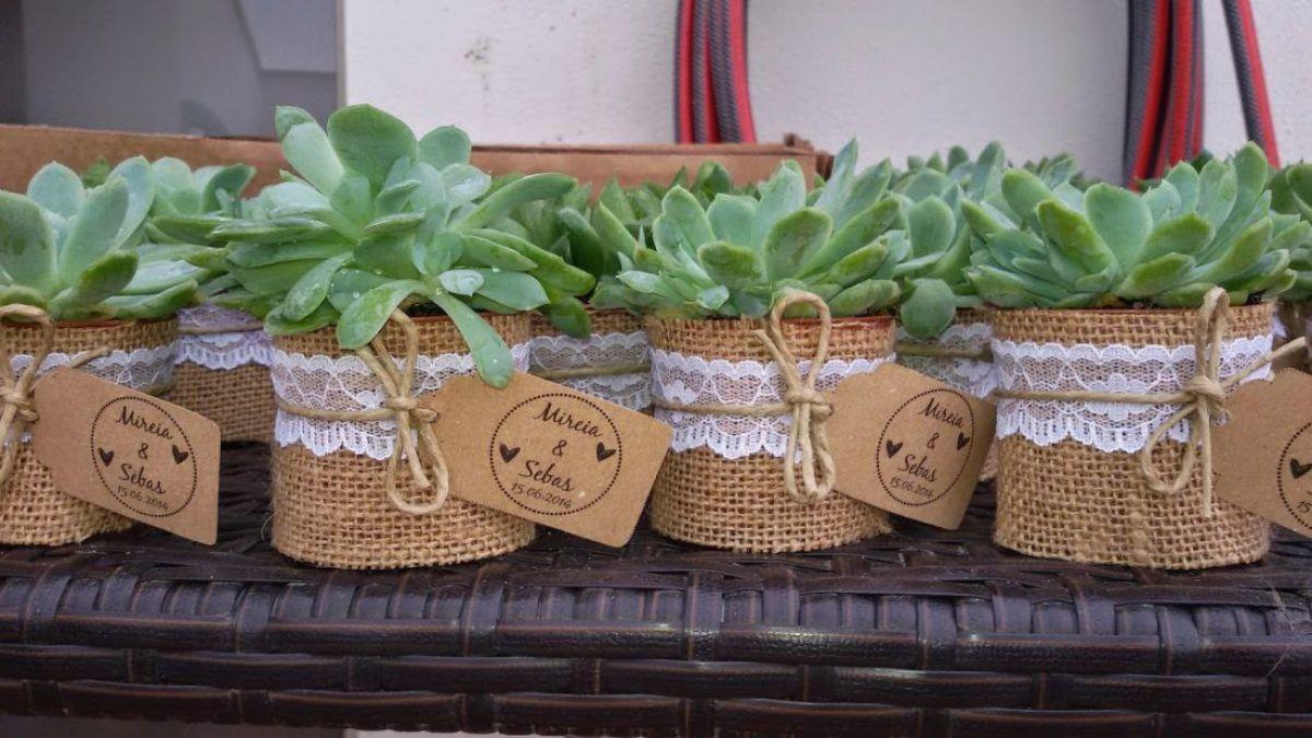 plantas crasas boda