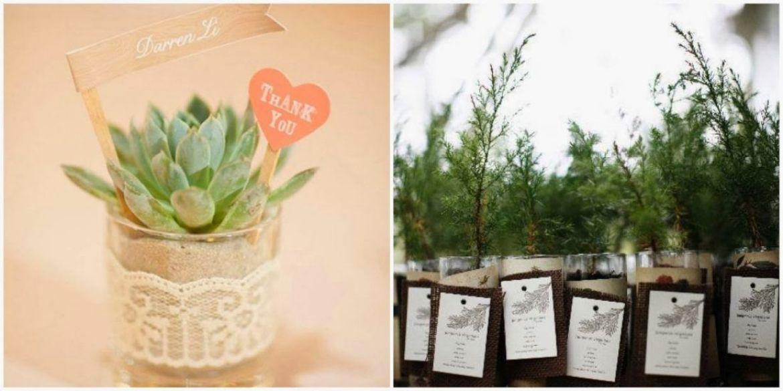 plantas crasas detalle boda