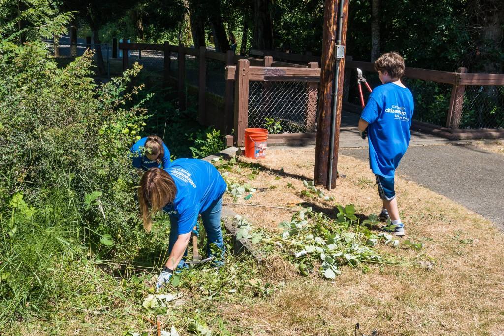 West Hill Action Mob (WHAM) Work Party volunteers clearing blackberries in Skyway Park, June 20 2015