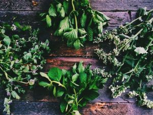 Online: Growing and Using Culinary Herbs