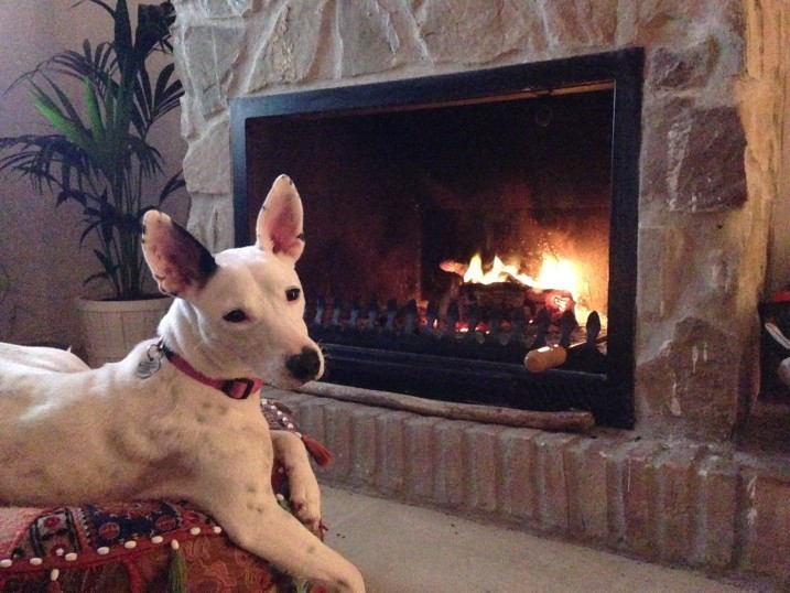Podenco by the fire