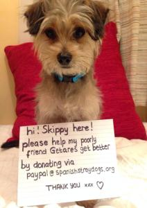 Skippy Fundraising