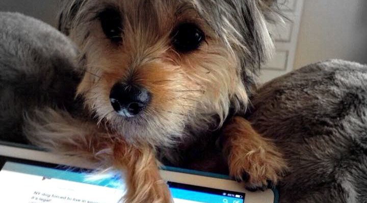 3 funny dog websites