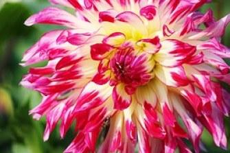 pray flower