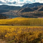 Fall vineyards in Okanagan Falls