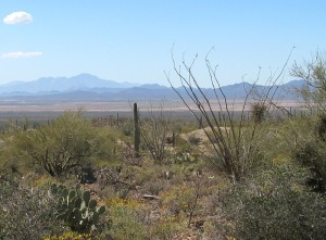 Arizona scenery